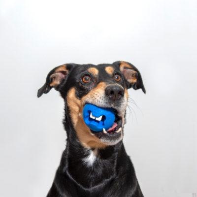 chien-jouet-rogz-bleu-balle-friandises
